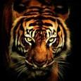 """""""Não perca a crença em seus sonhos do passado, voce deve lutar para mante-los vivos."""" A frase é um trecho da música de The Suvivors, """"Eye of the tiger"""", e..."""